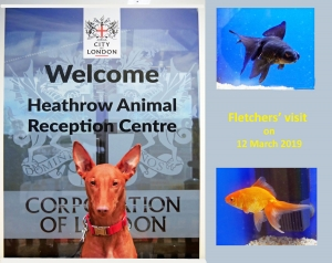 Heathrow Animal Reception Centre 2019